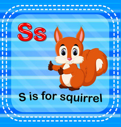 Flashcard letter s is for squirrel vector