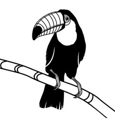 Toucan bird head for t-shirt vector image vector image