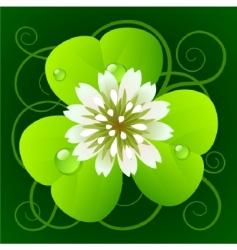 clover vector image
