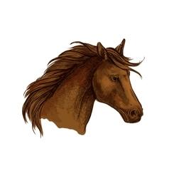 Stallion horse sketch of brown arabian racehorse vector