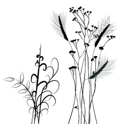 Collection for designers plant - set vector image