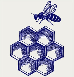 Working bee on honeycells vector image