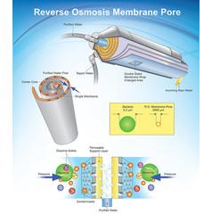 Reverse osmosis membrane pore system vector
