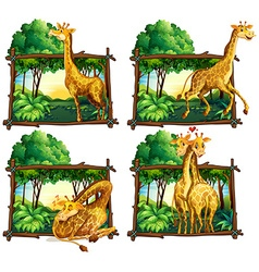 Four scenes of giraffes in the woods vector image
