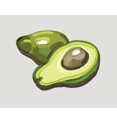 Fresh avocado vector
