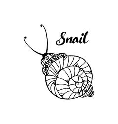Doodle style fun lacy snail monochrome animal vector image vector image