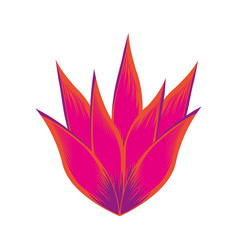 exotic and tropical flower icon vector image