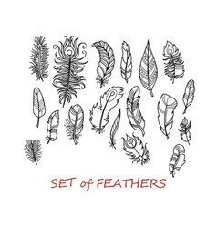 Ornate Set of Stylized and Abstract Feathers vector image