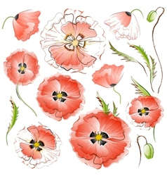 Set of isolated red poppy flowers vector