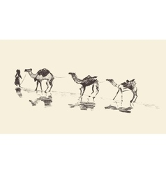 Caravan Camels Desert Sketch vector image