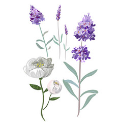 colorful tender hand drawn flowers lavender vector image