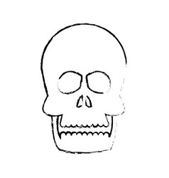 Human skull anatomy health front sketch vector