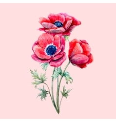 Watercolor red anemone flower vector