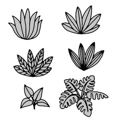 Tropical plants and leaves vector
