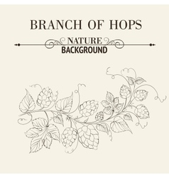 Hops with leafs isolated on sepia vector