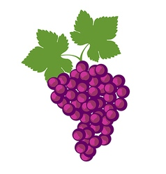 Detailed icons of grape with leaves vector