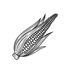 Hand drawn corn sketches on white background vector