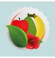 Apple banana flower and leaf design vector