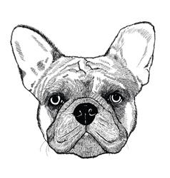French bulldog dog vector image vector image