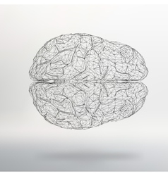 Human brain the structural vector