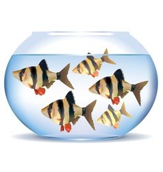 Aquarium with fish vector