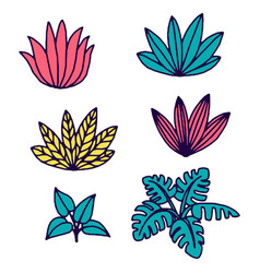 tropical plants and leaves vector image