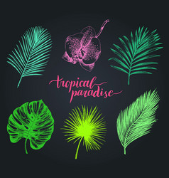 Vintage palm leaves tropic vector