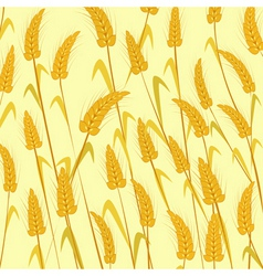 Ripe wheat vector