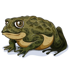 Toad vector