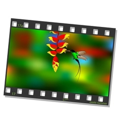 Film frame with hummingbird vector