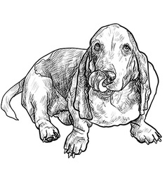 Basset hound dog sitting and stick out its tongue vector
