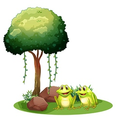 Two smiling frogs beside the tree vector image