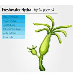 Freshwater hydra vector