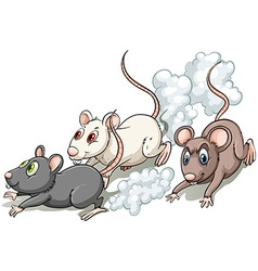 Three rats vector image