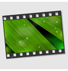 Film frame with macro leaf vector