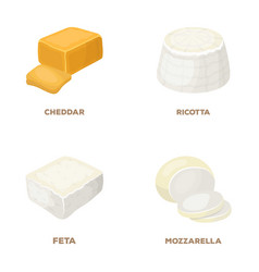 Mozzarella feta cheddar ricottadifferent types vector
