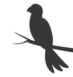 parrot silhouette icon vector image vector image