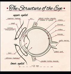 Structure eye sepia fon vector