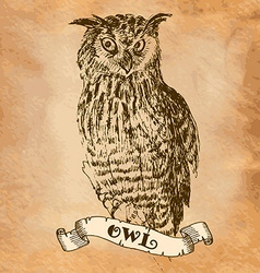 owl in the style of an engraving vector image