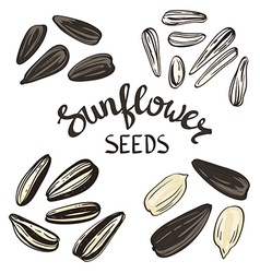 Set of sunflower seeds with vintage stylized vector
