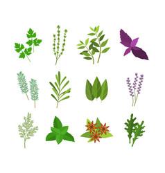 cartoon color herbs spices set vector image vector image