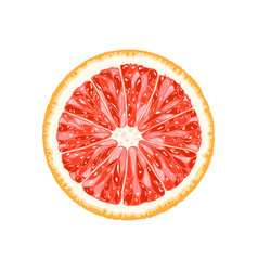 Grapefruit pomelo slice of citrus vector