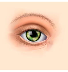 Woman green eye close up vector image