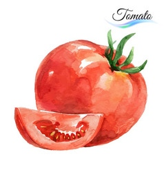 Watercolor tomato vector image