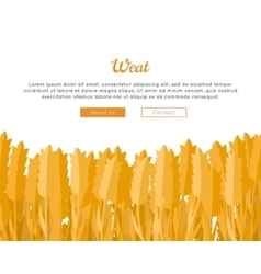 Wheat ears web template in flat design vector