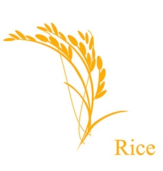 Rice ears vector