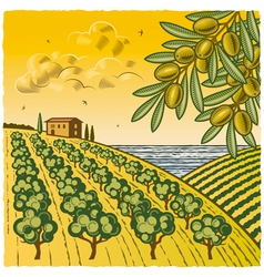 Landscape with olive grove vector
