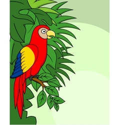 Macaw cartoon vector image