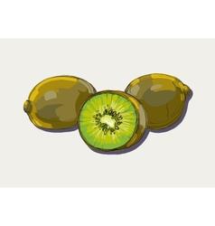 ripe kiwi vector image