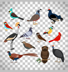 Cute birds set on transparent background vector